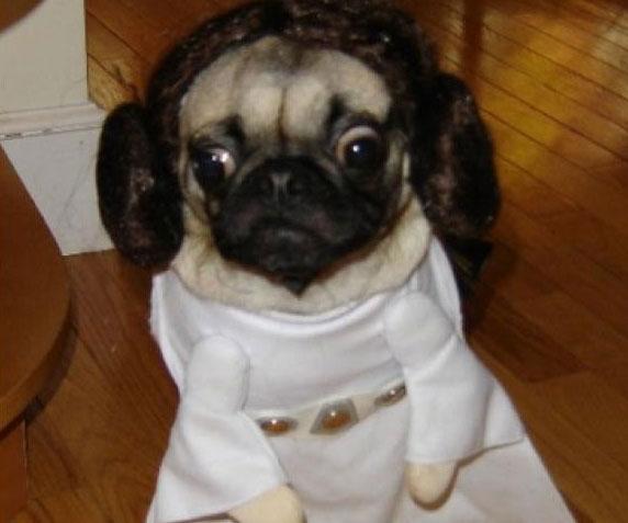 Merchandising loco de Star Wars Princess Leia Dog Costume
